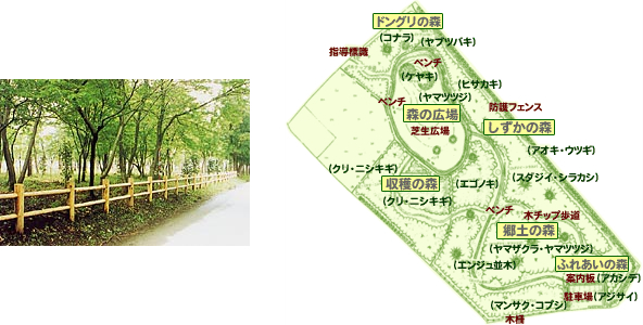 赤塚自然の森の画像